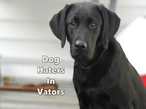 labrador_retriever_black_lab_dog