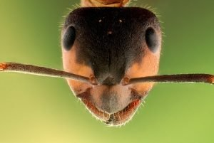 ant_picture