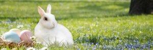 rabbit_groovatti