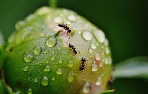 line_of_ants
